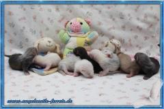 Aglaia´s Welpen 3 Wochen alt