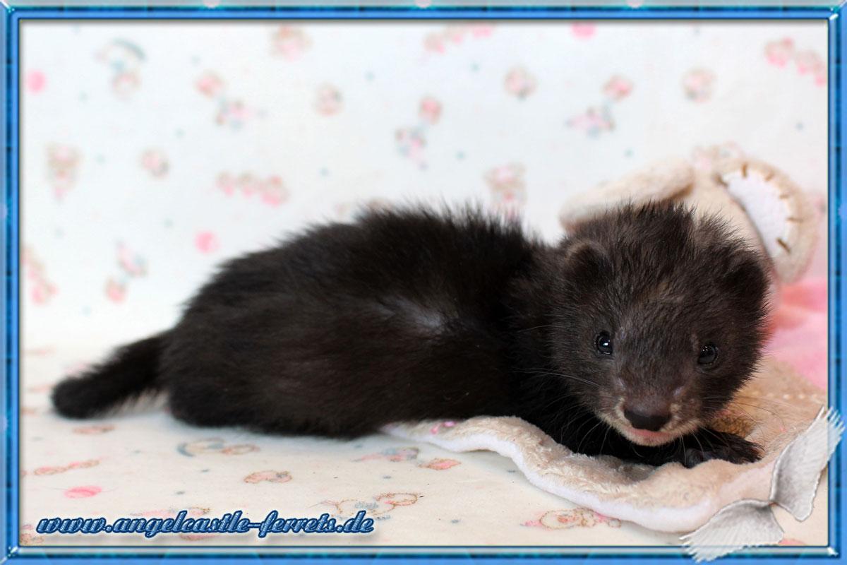 Freya 5 Wochen alt