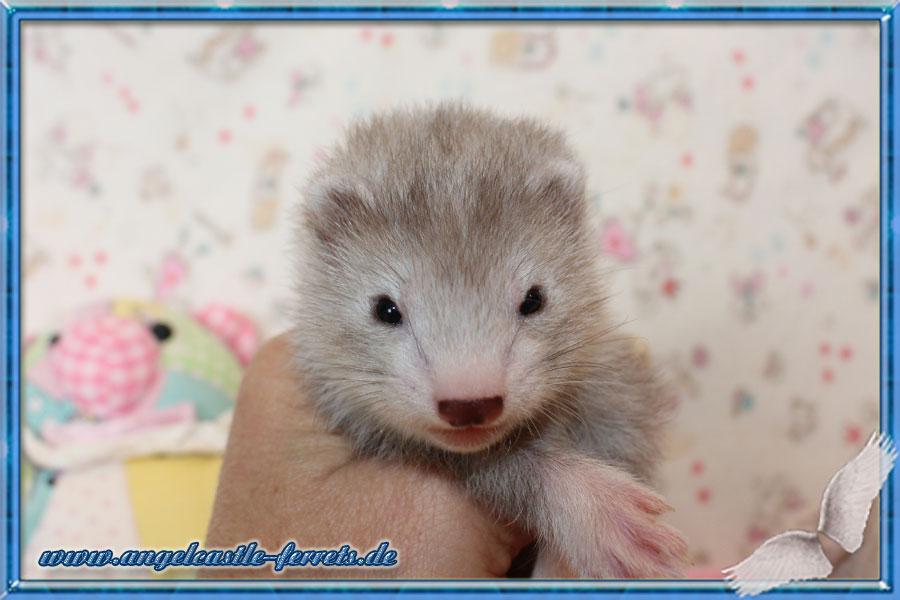 Bellatrix, 5 Wochen alt, Reserviert