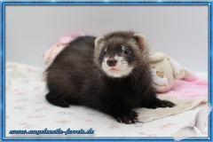 Gaia Lotte 7  Wochen alt