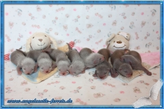 Mailee´s Welpen 2 Wochen alt