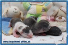 Megamis Welpen 2 Wochen alt