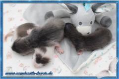 Megamis Welpen 3 Wochen alt