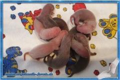 Pandoras Welpen geboren