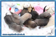 Yamis Welpen 3,5 Wochen alt
