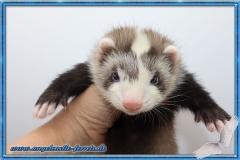 Daiya Lieschen  6 Wochen alt
