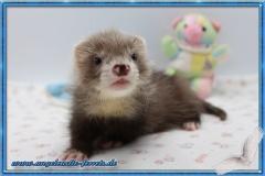 Grizu 7 Wochen alt